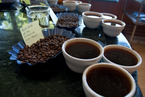 Cupping in the Coffee Lab